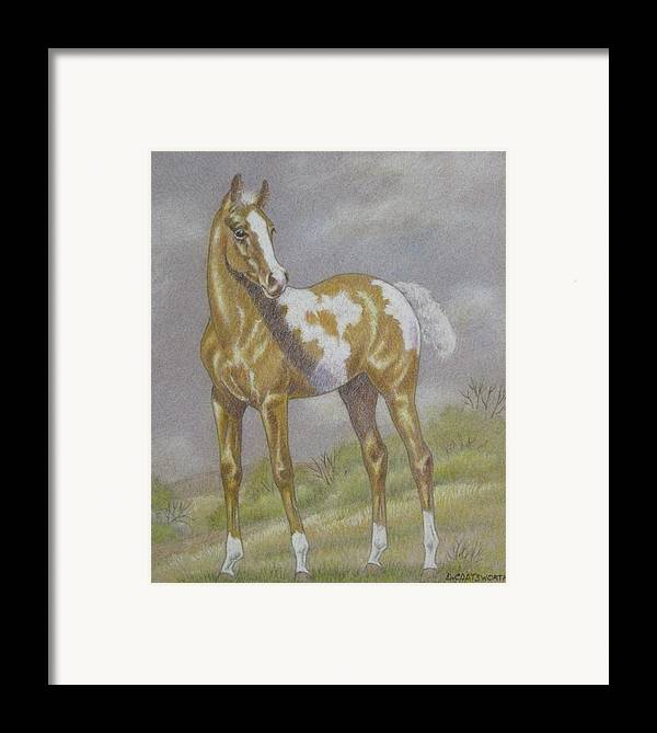 Paint Foal Framed Print featuring the pastel Palomino Paint Foal by Dorothy Coatsworth