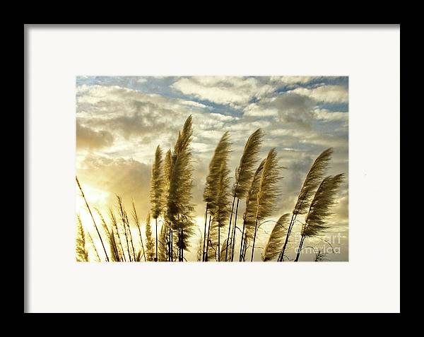 Nature Framed Print featuring the photograph Pampas Grass by Julia Hiebaum