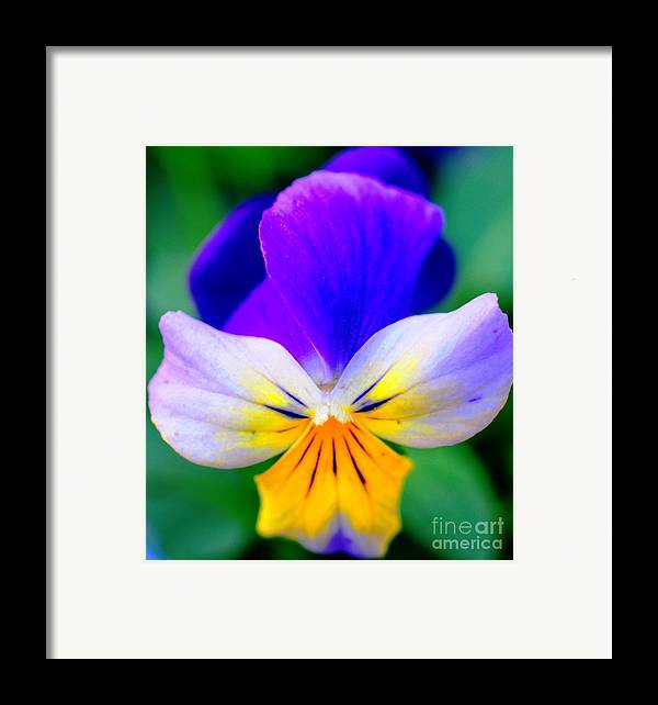 Pansy Framed Print featuring the photograph Pansy by Kathleen Struckle