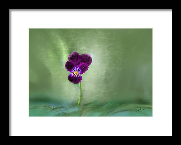 Pansy Framed Print featuring the digital art Pansy by Lisa Redfern
