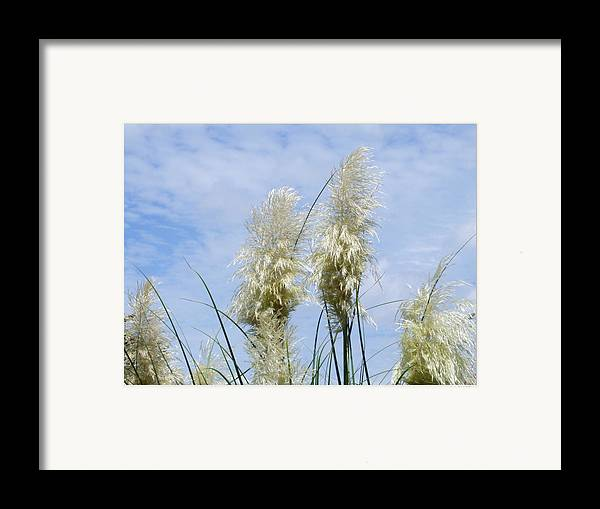 Grass Sun Sky Floral Scenery Framed Print featuring the photograph Papas Grass In The Sun by Linda Ebarb
