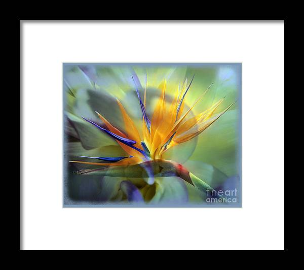 Flower Framed Print featuring the photograph Paradise Found by Chuck Brittenham