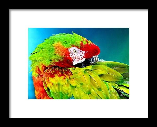 Parrot Time Framed Print featuring the photograph Parrot Time 1 by Lisa Renee Ludlum