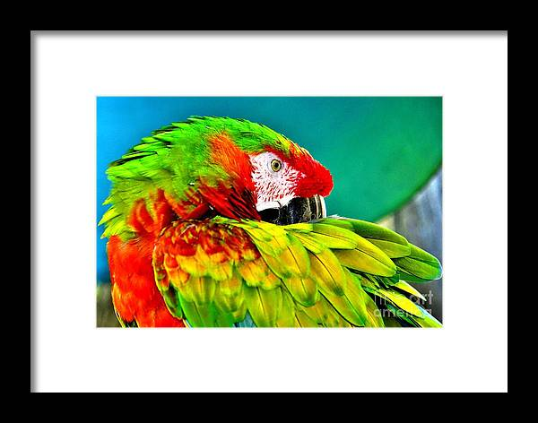 Parrot Time Framed Print featuring the photograph Parrot Time 2 by Lisa Renee Ludlum