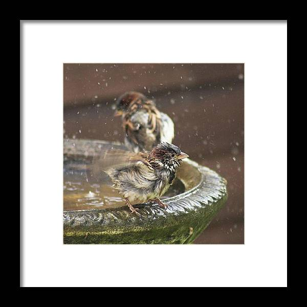 Nature Framed Print featuring the photograph Pass The Towel Please: A House Sparrow by John Edwards