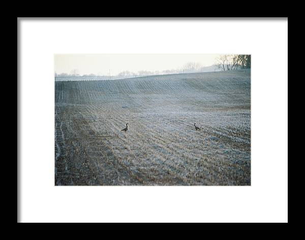 Geese Framed Print featuring the photograph Passing Through by Jennifer Trone