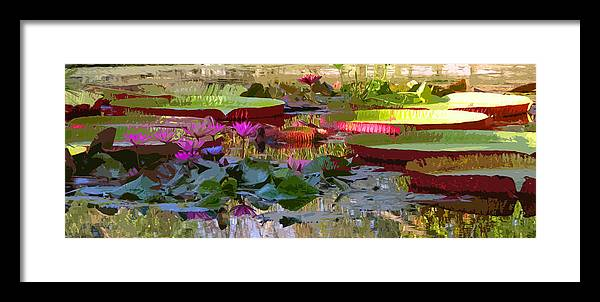 Water Lilies Framed Print featuring the photograph Passion for Beauty by John Lautermilch