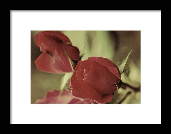 Roses Framed Print featuring the photograph Passion In Pink by Trudi Southerland