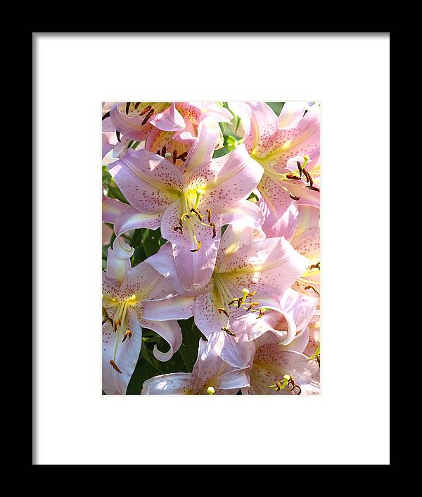 Passionate Framed Print featuring the photograph Passionate Pink by Kim