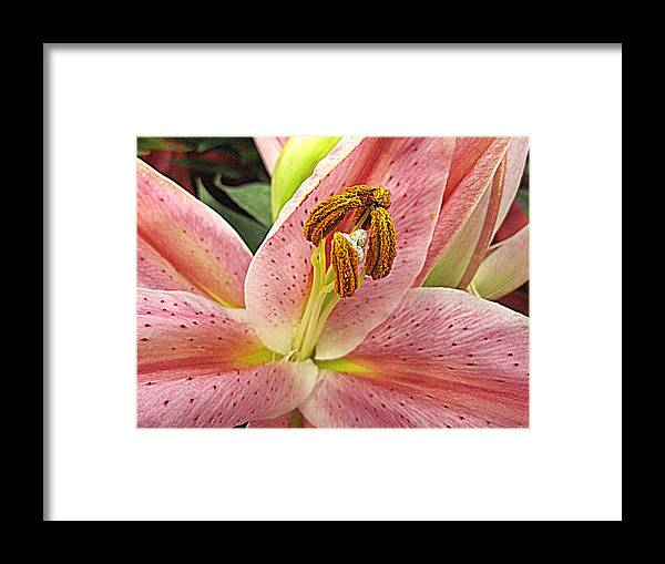 Flowers Framed Print featuring the digital art Pastel Pink Lily by Bonita Brandt