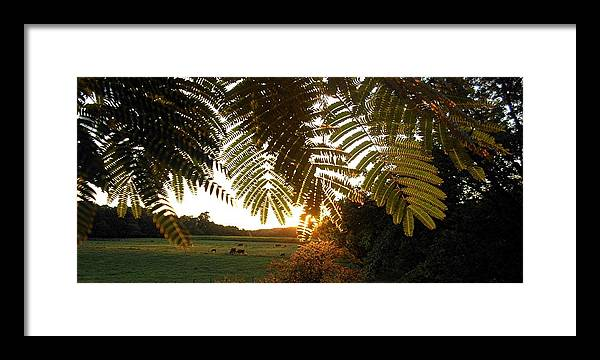 Trees Framed Print featuring the photograph Pasture At Sunrise by Caroline Urbania Naeem