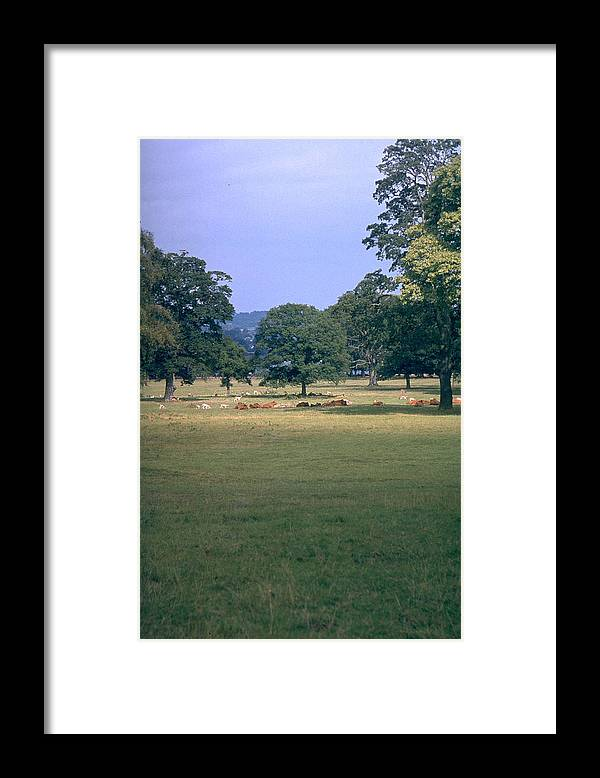 Great Britain Framed Print featuring the photograph Pasture by Flavia Westerwelle