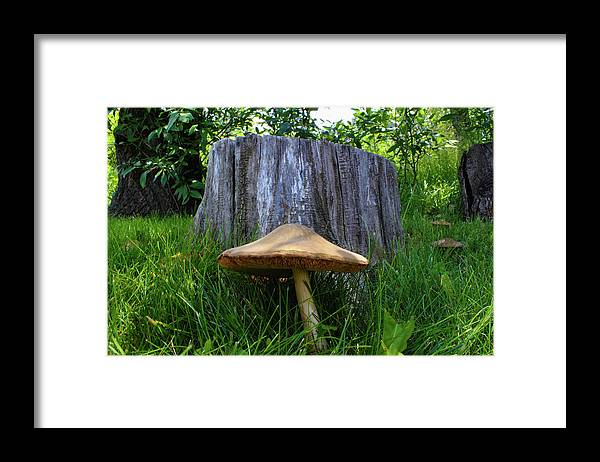 Mushroom Framed Print featuring the photograph Path of Mushrooms by Shane Bechler