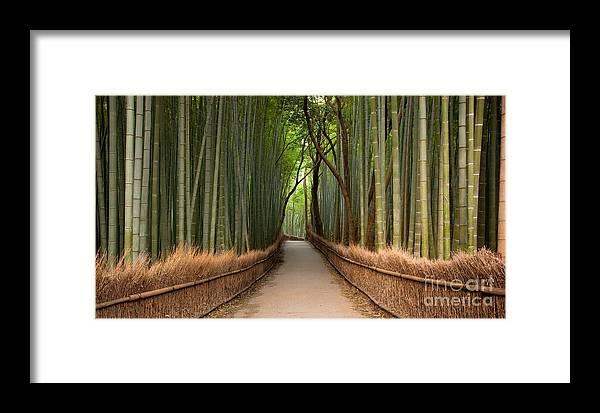 Arashiyama Framed Print featuring the photograph Path Through A Bamboo Grove In Kyoto by Ei Katsumata