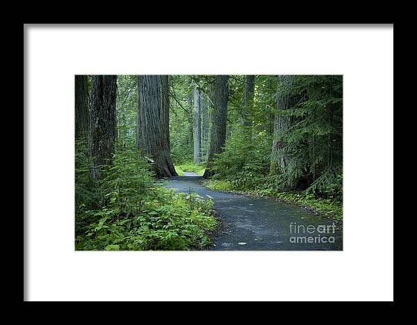 Grove Framed Print featuring the photograph Path Through The Cedars by Idaho Scenic Images Linda Lantzy
