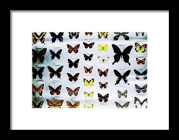 Alike Framed Print featuring the photograph Pattern Made Out Of Many Different Butterfly Species by Srdjan Kirtic