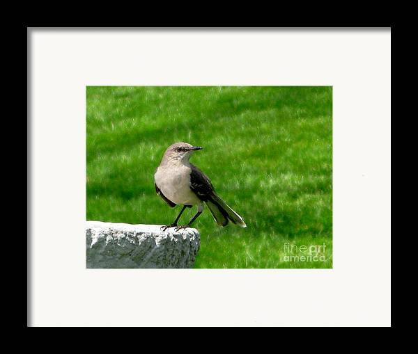 Bird Framed Print featuring the photograph Pause To Reflect by PJ Cloud