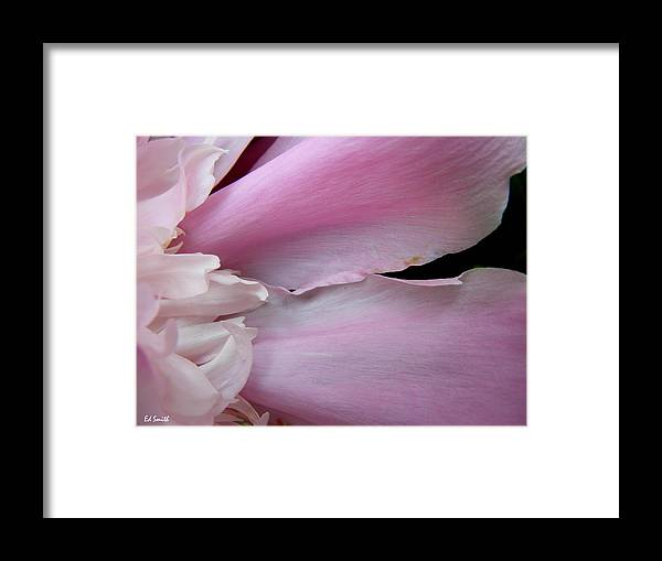 Peace Framed Print featuring the photograph Peace by Edward Smith