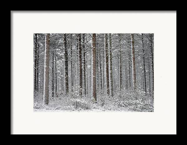 Woods Framed Print featuring the photograph Peace In The Woods by Catherine Reusch Daley