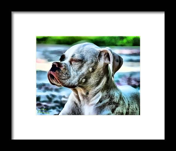 Dog Framed Print featuring the digital art Peace Of Mind by Kathy Tarochione