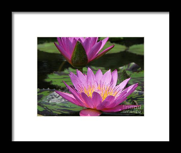 Lillypad Framed Print featuring the photograph Peaceful by Amanda Barcon