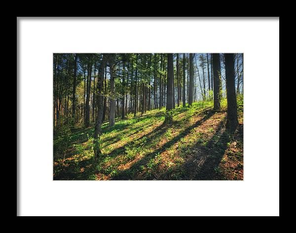 Peaceful Forest 4 - Spring At Retzer Nature Center Framed Print by ...