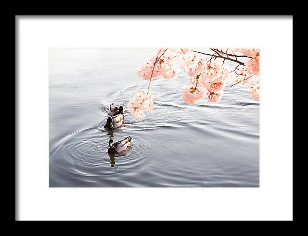 Framed Print featuring the photograph Peaceful Morning by Joshua Lebenson