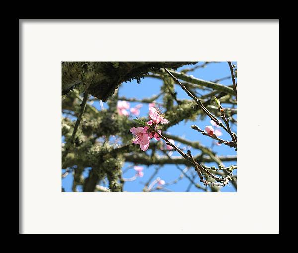 Peach Framed Print featuring the photograph Peach Blossom by Juli House