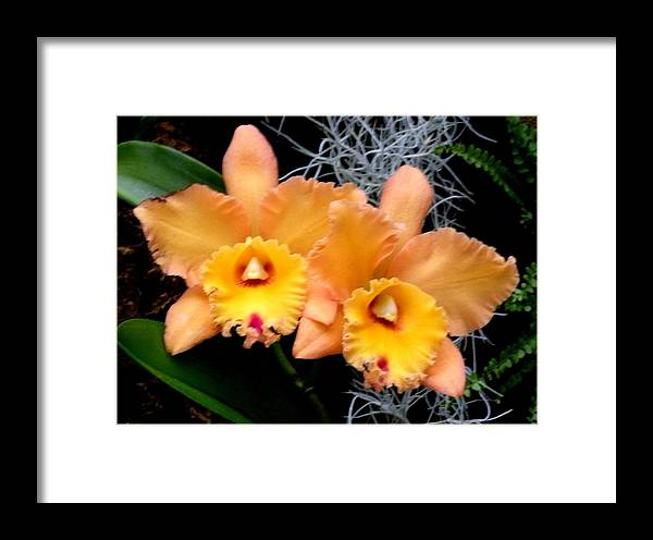 Flowers Framed Print featuring the photograph Peachy Couple by Jeanette Oberholtzer