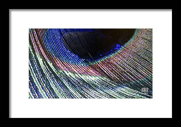 Microscopics Framed Print featuring the photograph Peacock Feather by Michele Caporaso