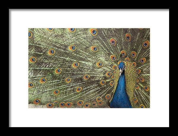 Peacock Framed Print featuring the photograph Peacock by Michael Hudson