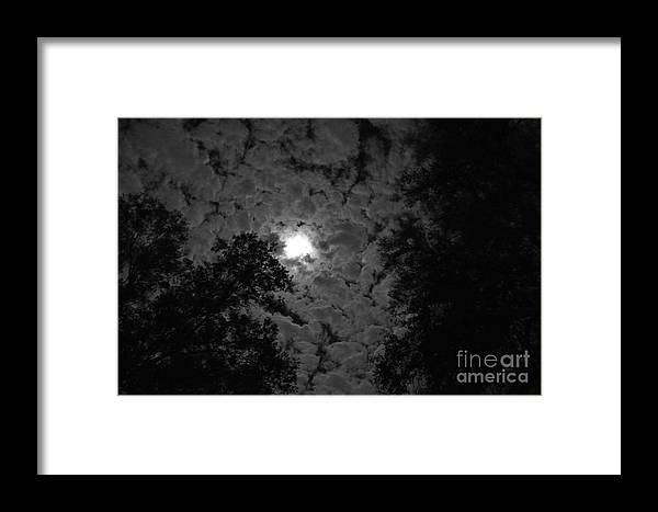 Trees Framed Print featuring the photograph Peek And Glow 2 by LeRoy Banks