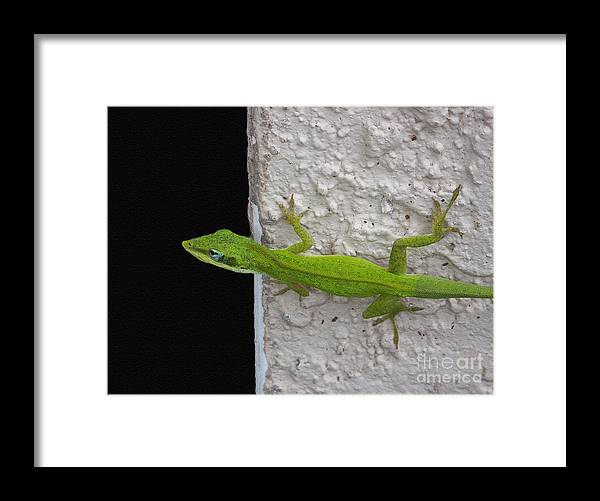 Lizards Framed Print featuring the photograph Peaking Lizard by Amanda Vouglas