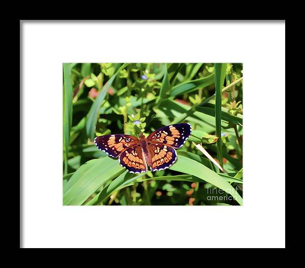 Butterfly Framed Print featuring the photograph Pearl Crescent Butterfly by Kerri Farley