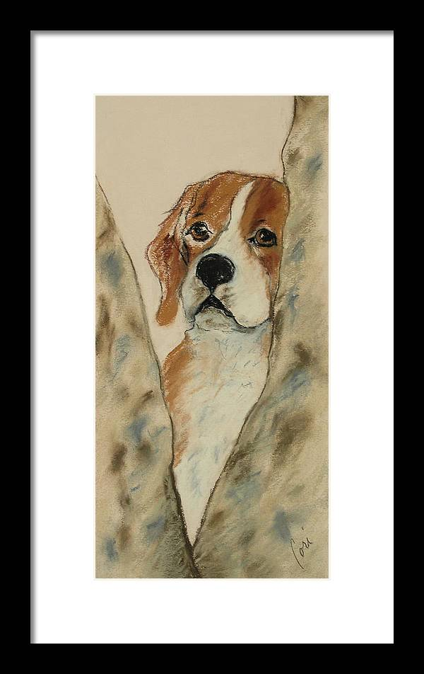 Beagle Framed Print featuring the drawing Peek A Boo by Cori Solomon