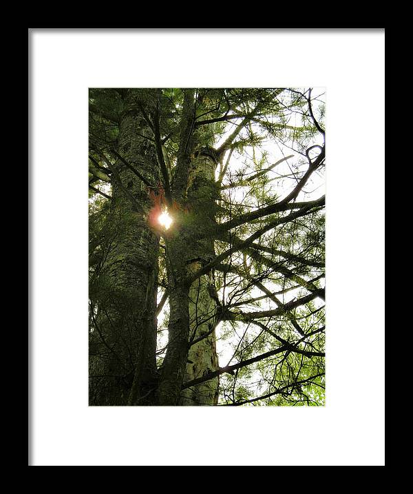 Trees Framed Print featuring the photograph Peek A Boo by Peter Mowry