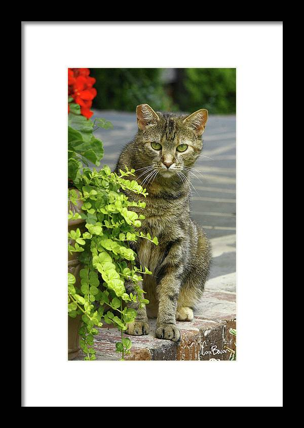 Photo Framed Print featuring the photograph Peeking by Cara Bevan