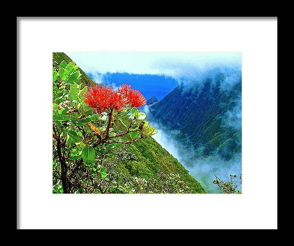 Ohia Lehua Framed Print featuring the photograph Peles Flower by James Temple