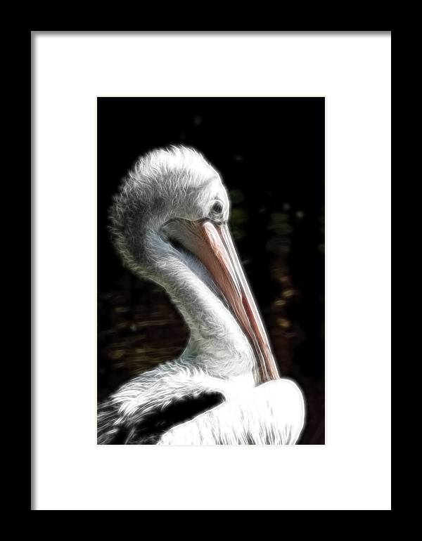 Pelican Framed Print featuring the photograph Pelican Dreams by Lesley Smitheringale