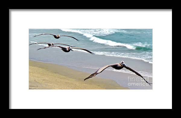 Pelican Framed Print featuring the digital art Pelican Fly-by by L J Oakes