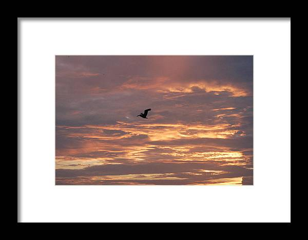 Pelican Framed Print featuring the photograph Pelican In Painted Sky by Michael Vanatta