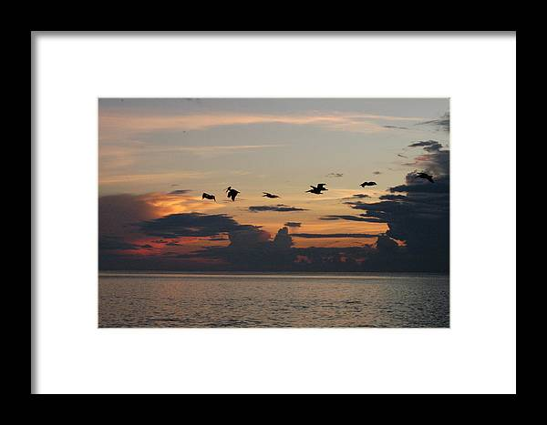 Pelicans Framed Print featuring the photograph Pelicans In Flight At Dawn by Michael Vanatta