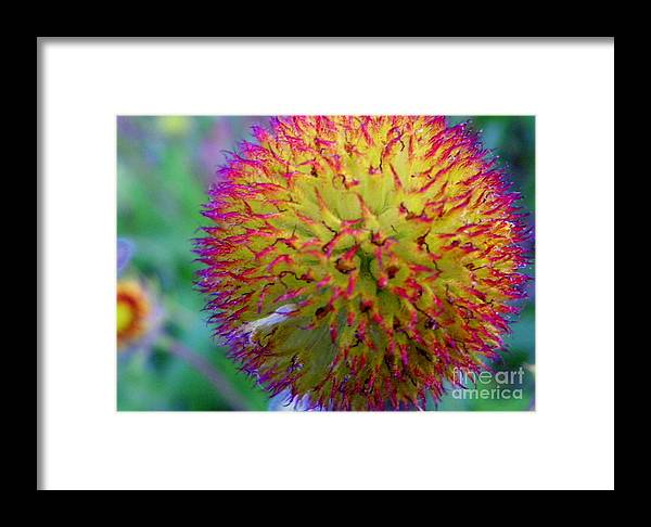 Pink Framed Print featuring the photograph Pelusa by Claudia Sanchez