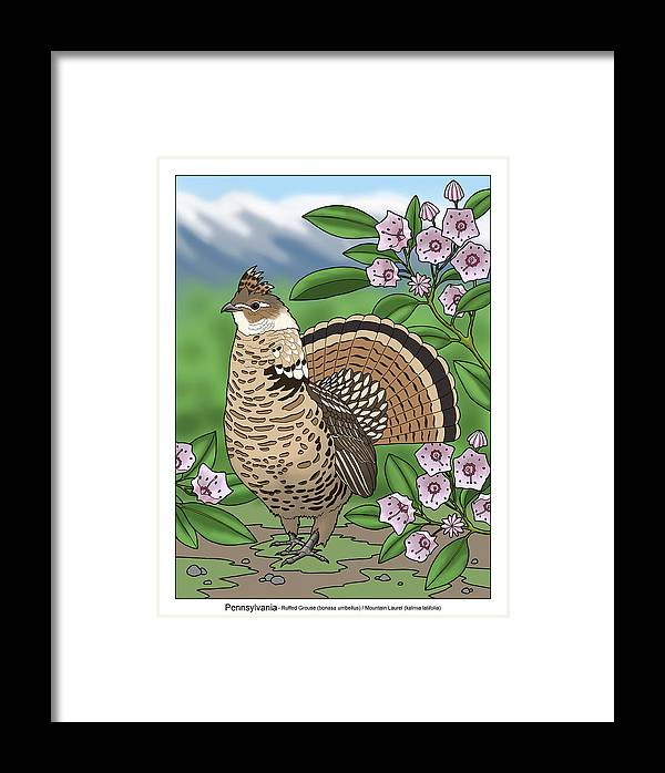 pennsylvania state bird grouse and flower laurel framed print by