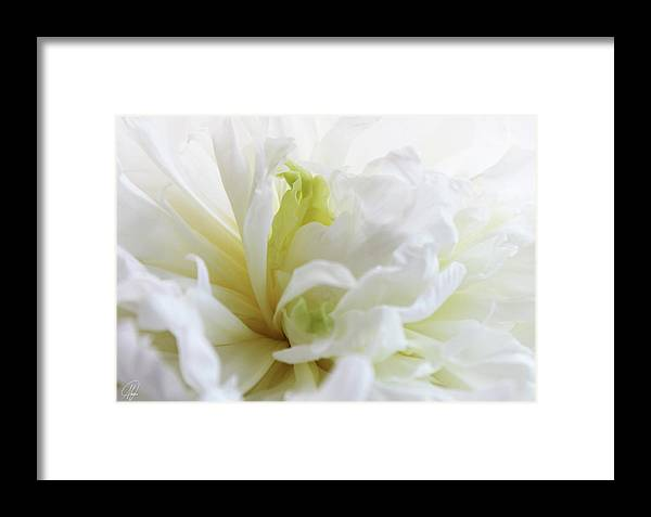 Cream Framed Print featuring the photograph Peony by Margaret Hormann Bfa