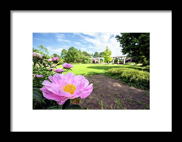 Flower Macro Closeup Close Up Close-up Peony Paradise Botanic Botanical Garden Boylston Ma Mass Massachusetts Outside Outdoors Pergola Flower Newengland New England U.s.a. Brian Hale Brianhalephoto Sky Trees Grass Beautiful Laowa Framed Print featuring the photograph Peony Paradise by Brian Hale