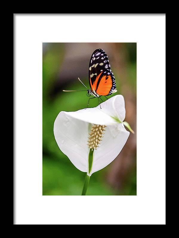 Butterfly Framed Print featuring the photograph Perching Butterfly by Jerry Cahill