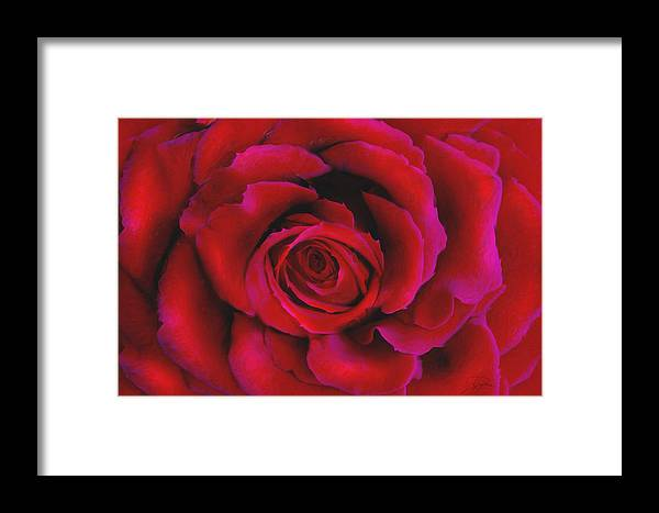 Rose Framed Print featuring the painting Perfect Rose by Joel Payne