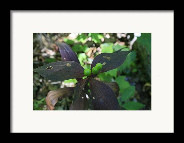 Wildberries Framed Print featuring the photograph Perfection by Alan Rutherford
