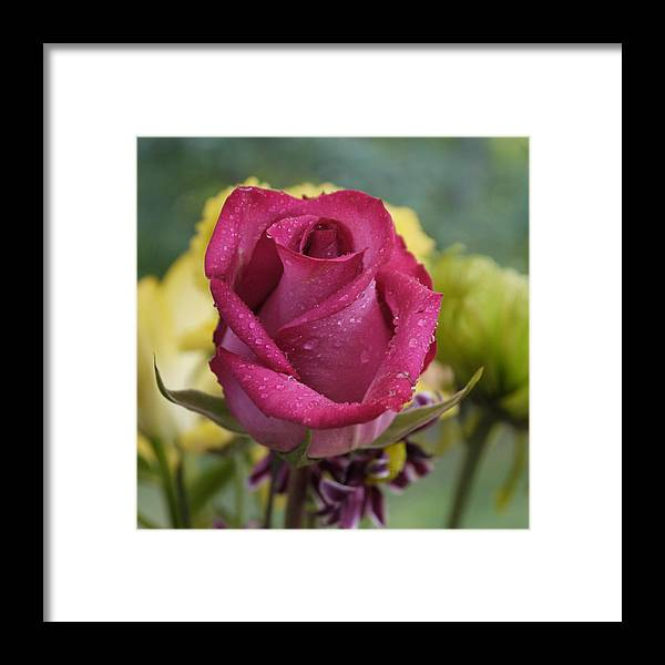 Rose Framed Print featuring the photograph Perfectly Pink by Nancie DeMellia